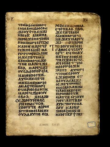 parchemin ; codex