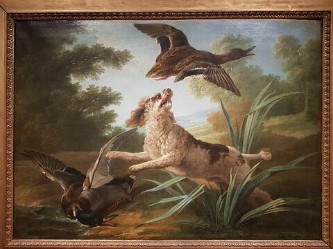 Chien barbet faisant lever deux canards dans les roseaux