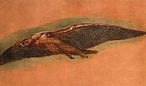 Un Oiseau de proie volant