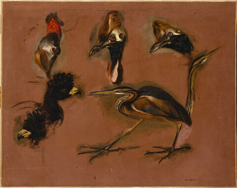 Un Oiseau échassier et six têtes d'oiseaux