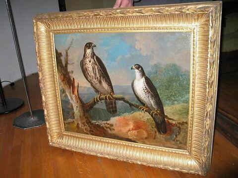 Deux faucons ; étude