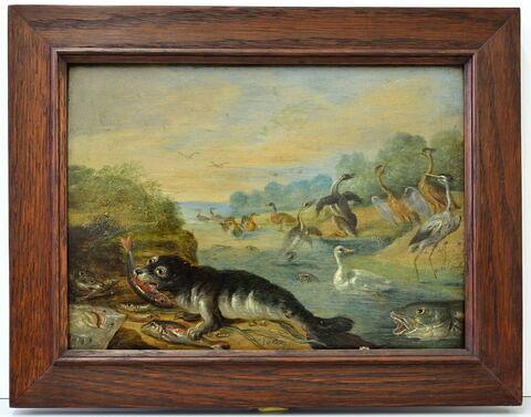 Hérons et poissons