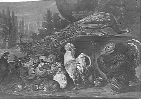 Nature morte au dindon, paon et coq