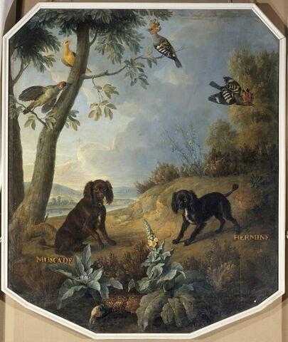Muscade et Hermine, chiennes de Louis XV