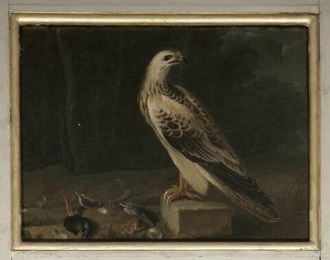 Un oiseau de proie ; fond de paysage