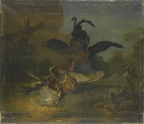 Combat de deux coqs