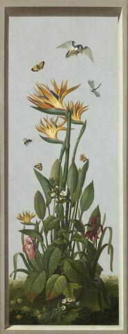 Huit tableaux représentant diverses espèces de lys : Lilium candidum (Lis blanc), Amaryllis belladonna (Amaryllis belladonne)