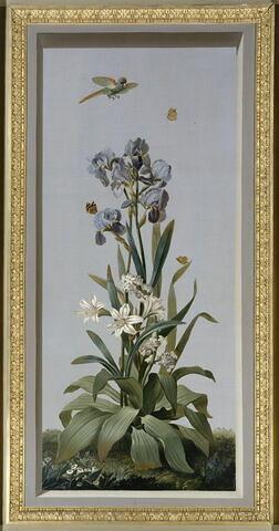 Huit tableaux représentant diverses espèces de lys : Hemerocallis fulva (Hémérocalle fauve), Amaryllis curvifolia (Amarillys à feuilles recourbées), Morea vaginata (Morée à longue gaine)