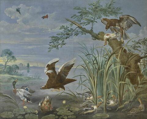 Aigles s'abattant sur des canards