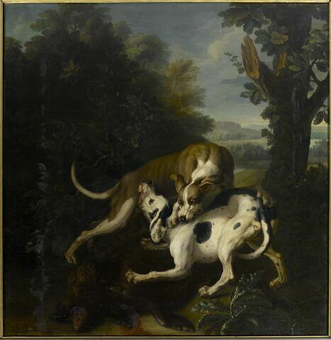 Combat de deux chiens autour de la dépouille d'un sanglier