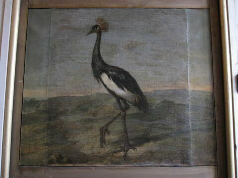 Oiseau étranger (échassier) blanc et noir, à aigrette. Étude