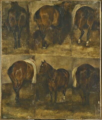 Études de chevaux