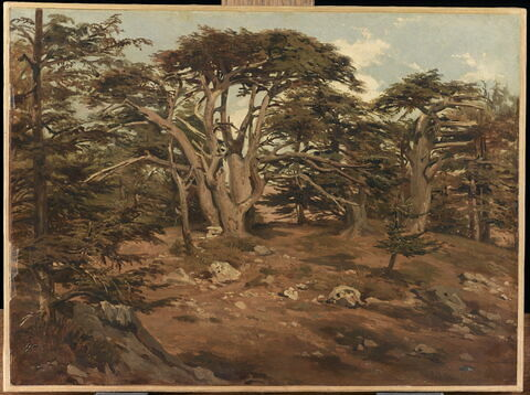 Les vieux cèdres sur le Mont Liban