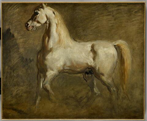 Cheval blanc de profil à gauche. Étude.