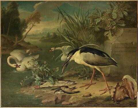 Héron bihoreau, deux cygnes, brochet et autres poissons d'eau douce