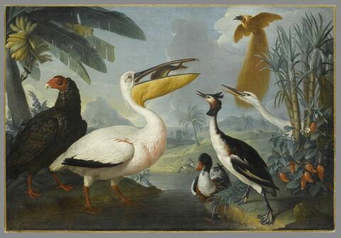 Oiseaux exotiques.