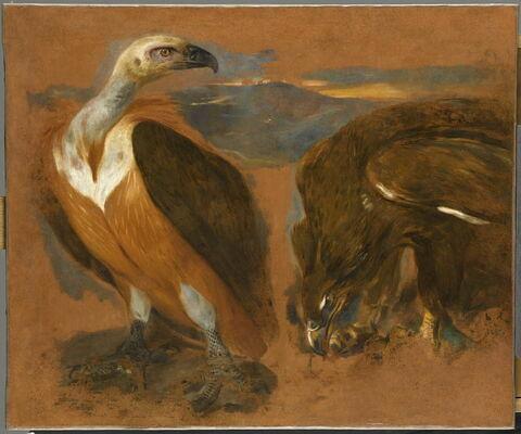 Un vautour et un aigle