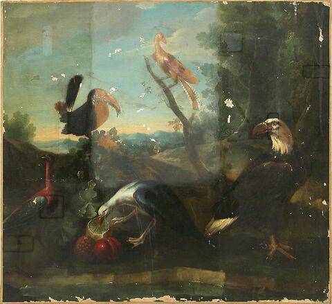 Aigle à tête blanche et quatre autres oiseaux dont un becquette une grenade