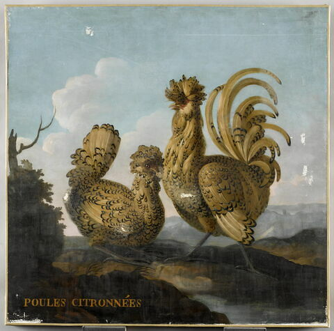 Deux poules citronnées