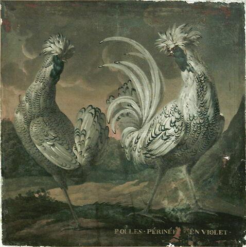 Deux poules périnées en violet