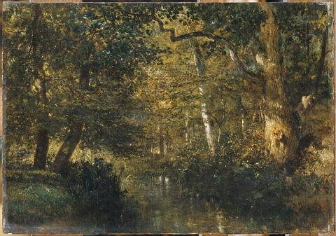 Cours d'eau sous bois