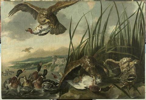 Aigles attaquant des canards