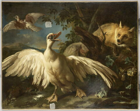 Canard de Barbarie et renard