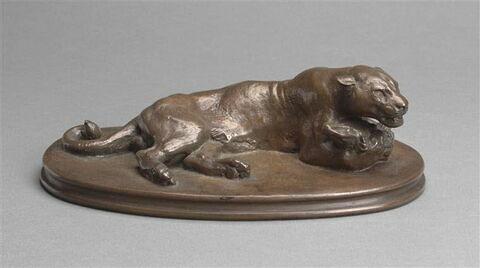 Jaguar couché tenant une tête de cheval