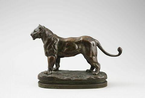 Lionne d'Algérie