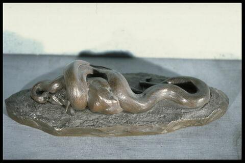 Serpent python avalant une biche