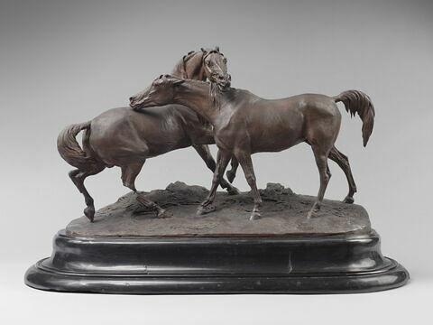 Tachiani et Nedjebe chevaux arabes