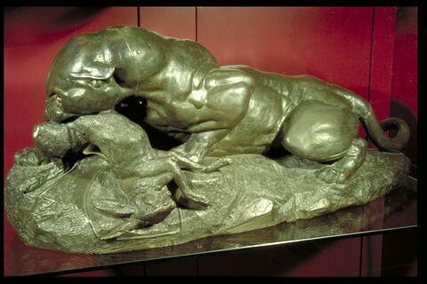 Jaguar dévorant un lièvre