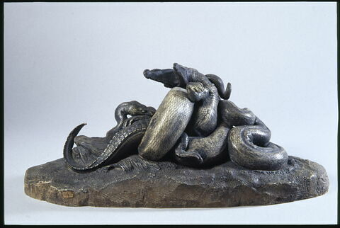 Serpent python étouffant un crocodile