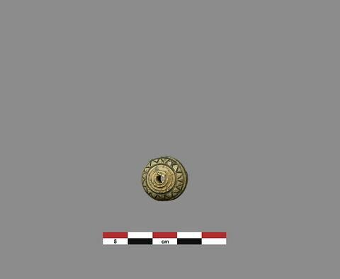 bouton ; fusaïole