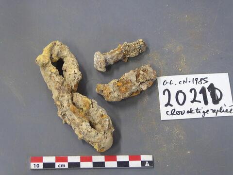 tige fragment