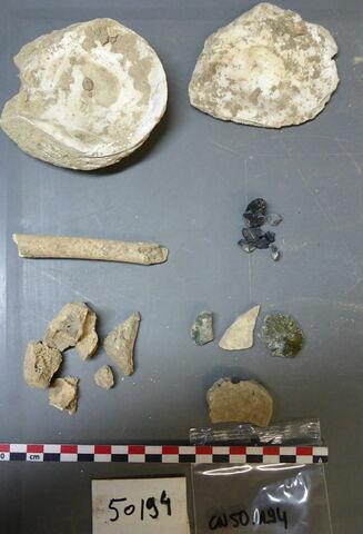 vase, récipient, fragment ; reste animal, os ; reste animal coquillage, fragment ; reste organique et minéral, produit naturel et déchet industriel