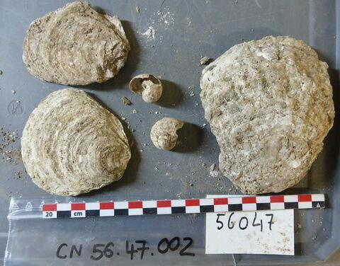 reste animal coquillage, fragment ; escargot, fragment