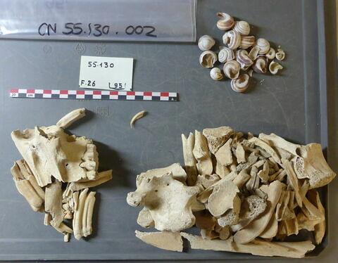 reste animal, os ; reste animal, dent ; escargot, fragment ; escargot