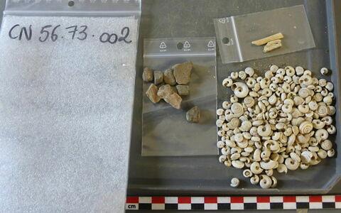 objet indéterminé, fragment ; reste animal, os ; escargot, fragment
