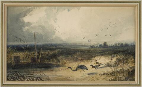 Oiseaux au bord d'un étang