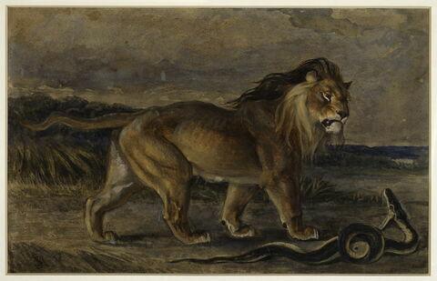 Lion et serpent