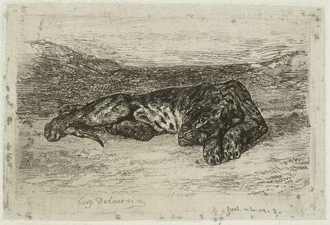 Tigre couché dans le desert (4e état)
