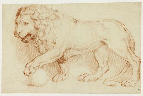 Un lion debout, tourné à gauche