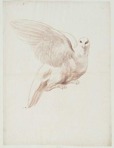 Une colombe, les ailes à demi-déployées
