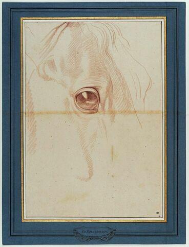 Oeil d'un cheval