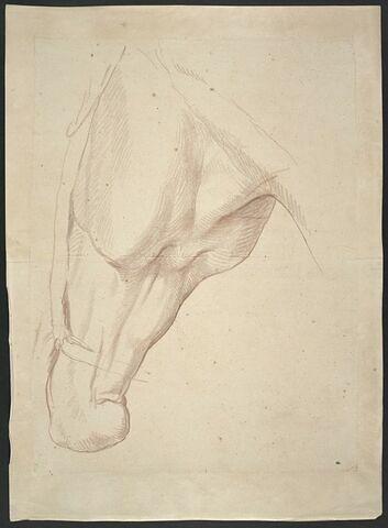Tête de cheval, vue en dessous