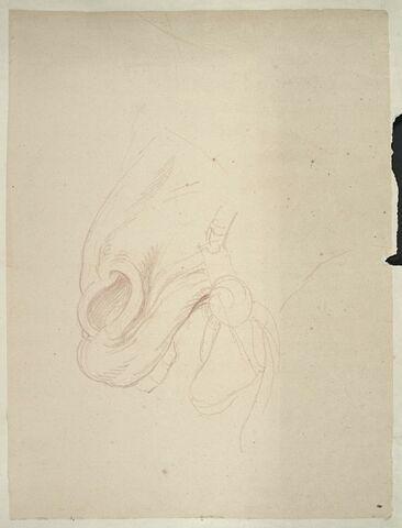 Naseaux et lèvres d'un cheval, de profil