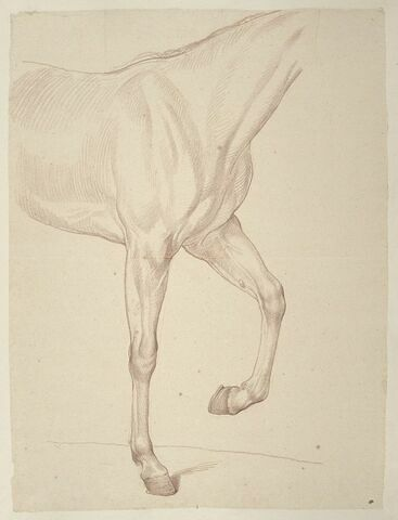 Cheval, vu du garrot au dos et des jambes antérieures, de profil