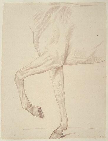 Cheval, vu du poitrail au dos et des jambes antérieures, de profil