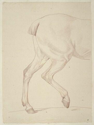 Partie postérieure d'un cheval, de profil